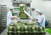 Vingroup liên kết với 1.000 hợp tác xã và hộ nông dân