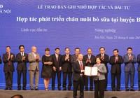 Hà Nội đẩy mạnh chăn nuôi bò sữa công nghệ cao
