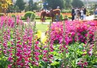 Đà Lạt 'trải thảm đỏ' đón du khách dự Festival hoa