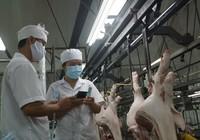 Khủng hoảng thịt heo: Bộ Công thương có vô can?