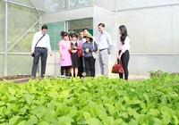 TPHCM cũng có tour 'một ngày làm nông dân'
