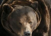 Một người phụ nữ bị gấu tấn công và chôn sống