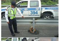 Cảnh sát giúp một chú lười qua đường