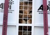 33 sư tử cứu thoát từ rạp xiếc được đưa đến châu Phi