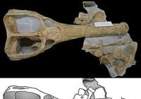 Phát hiện hóa thạch cá sấu nặng tám tấn từng sống ở biển