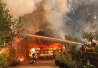 Cháy rừng California, 10 người chết