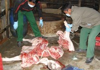 Dân cung cấp 45 thông tin về giết mổ gia súc trái phép
