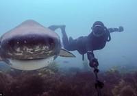 """Hai cô gái liều mạng chụp ảnh """"tự sướng"""" cùng cá mập"""