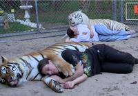 Người phụ nữ nuôi hổ trong nhà... như thú cưng
