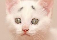 """Chú mèo gây sốt nhờ cặp """"lông mày"""" khác thường"""