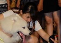 Giới trẻ Sài Gòn 'khoe' chó ở phố đi bộ Nguyễn Huệ