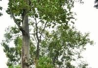 Thảo Cầm Viên Sài Gòn, chứng tích lịch sử qua những gốc cây đại thụ