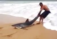 Chàng trai dũng cảm giải cứu cá mập mắc cạn
