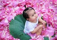 Hà Nội rực rỡ mùa hoa sen