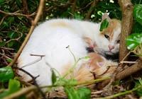 Kỳ lạ mèo đẻ con trong chiếc tổ chim trên cây