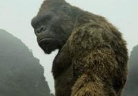 Khỉ Kong được dựng kỹ xảo ra sao?