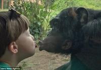 Clip: Màn hôn môi giữa tinh tinh và cậu bé 4 tuổi