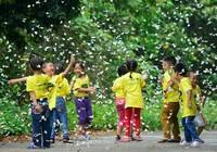 Vào rừng Cúc Phương ngắm bướm bay rợp trời