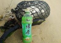 10 km bờ biển ngổn ngang vỏ chai nhãn Trung Quốc