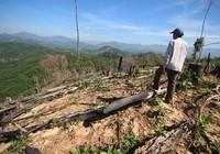 Vụ phá rừng ở Quảng Nam: Thủ tướng chỉ đạo xử lý nghiêm