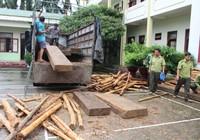 Thấy kiểm lâm, tài xế chở gỗ lậu tăng ga chạy vào rừng