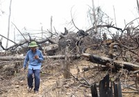Chủ tịch xã bị cách chức vì để rừng bị phá tan hoang