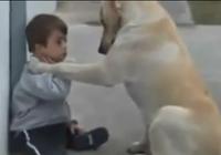 Cảm động chú chó thông minh vỗ về chú bé lang thang