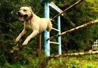 Clip: Chú chó nhảy Parkour siêu ngoạn mục