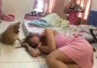 Chú cún khóc thương cô chủ hot nhất tuần qua