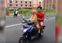 Clip: Chó chở chủ trên xe máy ở Indonesia hot nhất tuần qua