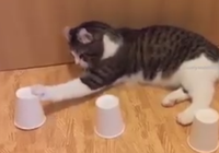 Chú mèo thông minh chơi trò đoán vật trong 3 chiếc cốc