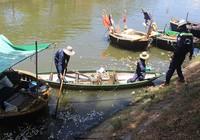 Sáng ra thấy cá chết trắng kênh Phú Lộc