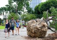 Chùm ảnh: Bứng dưỡng và đốn hạ 75 cây xanh làm metro