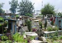 Đất nghĩa trang Bình Hưng Hòa đấu giá gần 15 triệu/m2