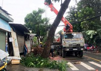 """TP.HCM: Nhiều nơi thiệt hại nặng bởi cơn """"cuồng phong"""""""