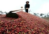 Việt Nam xuất siêu 1,3 tỉ USD trong 5 tháng
