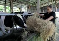 Nhà sản xuất cung cấp cám trực tiếp cho nông dân