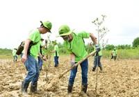 Amway: Làm sạch bãi biển và trồng cây tại Cần Giờ