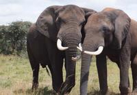 Bảo vệ động vật, gìn giữ môi trường