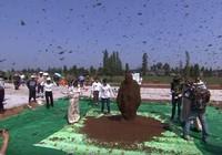Xem 'dị nhân' để 637.000 con ong bu kín người