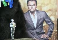 Leonardo Dicaprio sắp nhận thêm tượng Oscar thứ hai