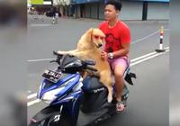 Chó lái xe máy chở chủ gây sốt ở Indonesia