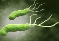 Những vi khuẩn hay gây ngộ độc có trong thực phẩm