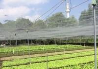 Giới trẻ đến với nông nghiệp sạch