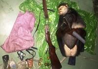 Công an truy bắt 2 nghi can bắn voọc chà vá chân nâu