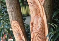 Độc đáo cây phát tài khắc hình Phật tại chợ hoa Sài Gòn
