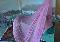 TP.HCM: 5 ngôi nhà bất ngờ sụp xuống sông