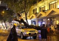 Cổ thụ trên đường Đồng Khởi bật gốc đè trúng ô tô