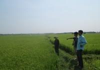 'Trảm' một dự án khai thác đá ở cánh đồng màu mỡ