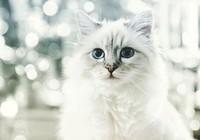 Câu chuyện về cô mèo kiếm được hơn 63 tỉ đồng/năm